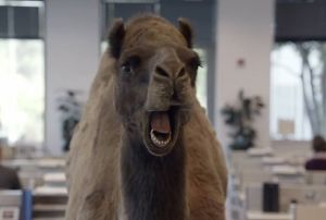 MMM.HumpDay.7.15.13.camel
