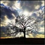 That Tree.markhirsch.7.29.13.b