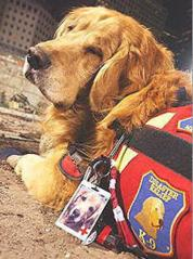K-9 DISASTER RELIEF NIKIE