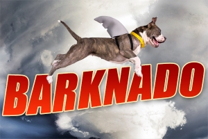 Barknado.ASPCA.July2014