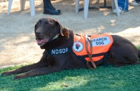 NatlSearchDog.Oct2014