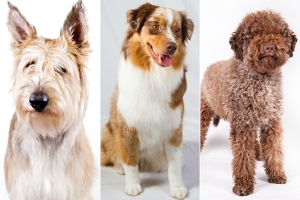 DogNews.AKCbreeds.June2015