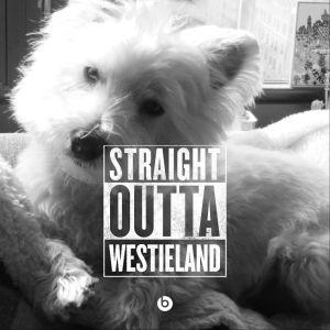 StraightOuttaCompton.Westieland.8.9.15
