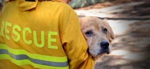 WeCanHelp.ASPCA.CAwildfire.Sept2015