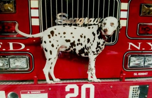 FIREHOUSEDOG.Jan2016.b-USE