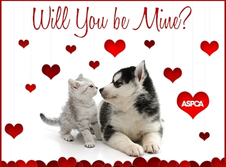 ASPCA.ValentinesEcard.cr-use