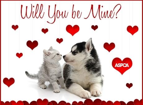 ASPCA.ValentinesEcard.cr-use