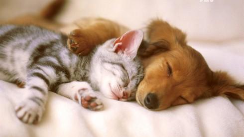 WeCanHelp.AnimalShelter.catdog.june2016