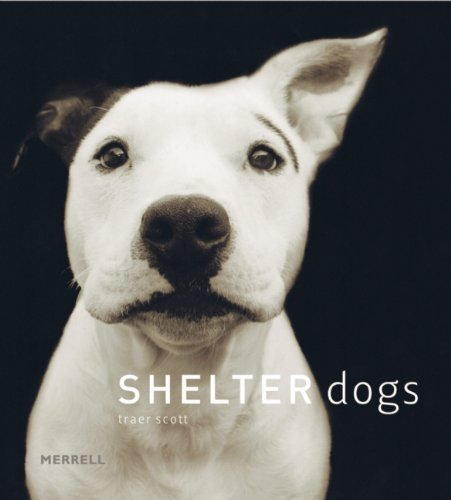 DogNews.Book.ShelterDogs.july2016