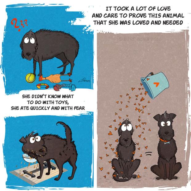 RescueDog.aug2016