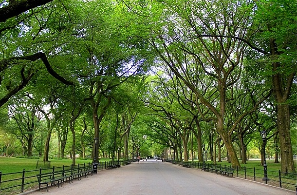 americanelmtree-oct2016-cr-use