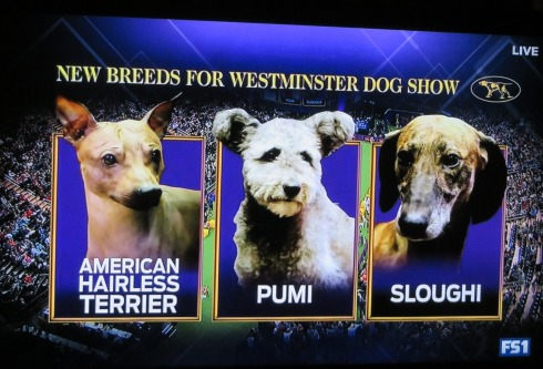 dogshow-3newbreeds