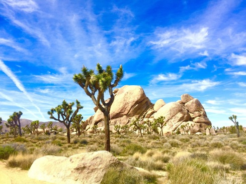 JoshuaTree.mar2017