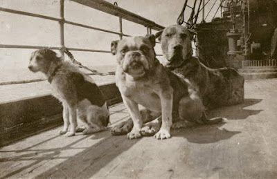DogNews.DogsOnTheTitanic1912.may2017
