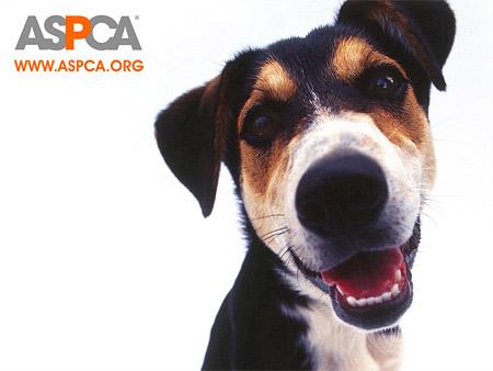 ASPCA-Dogblackwhite.july2017