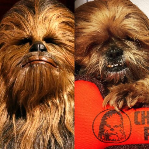 Chewbacca.dec2017-USE