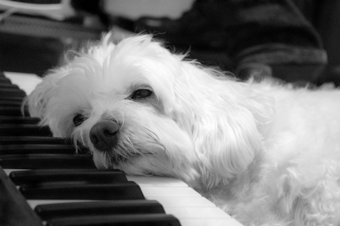 6.DogNews2.MozartMusic.apr2018.peterbudogonpiano