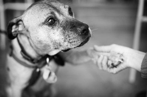8.WeCanHelp.dogfighting