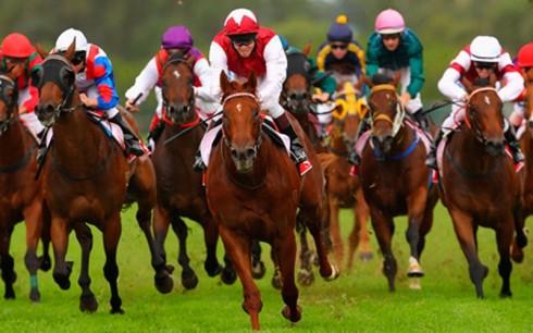 6.HorseRacing.may2018