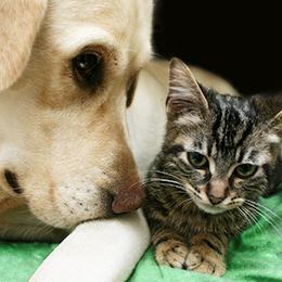 9.WeCanHelp.ASPCA.jul2018
