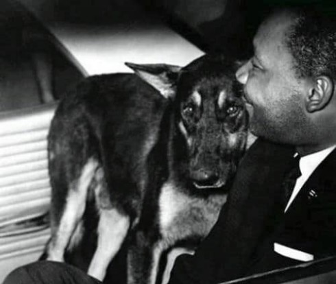 5.mlk.dog.cr.jan2019