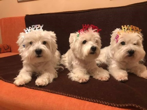6.dognews.jan2019.westies